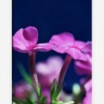 Игры цветов