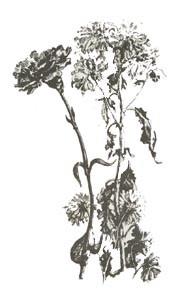 Наброски цветов