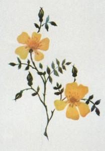 Наброски цветов и растений. Карандаш, акварель